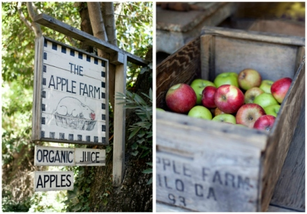 Apple Orchard Wedding 10