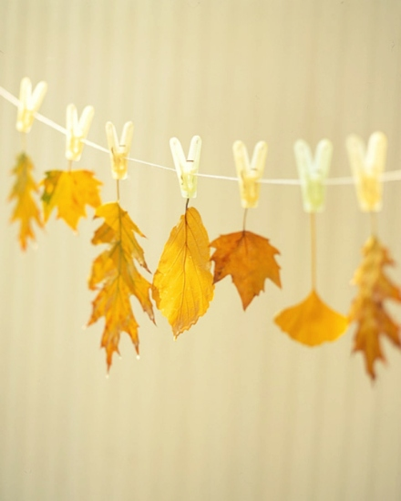preserved fall leaves